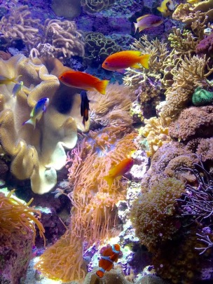 Fishies Shedd Aquarium
